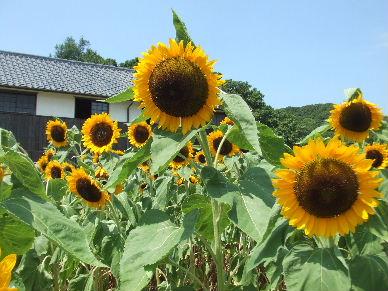 2010_0801瀬戸♪0148
