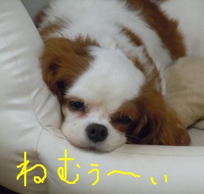 ねむぅ~い