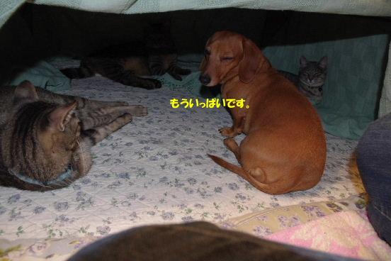 2010_1104neko0015.jpg
