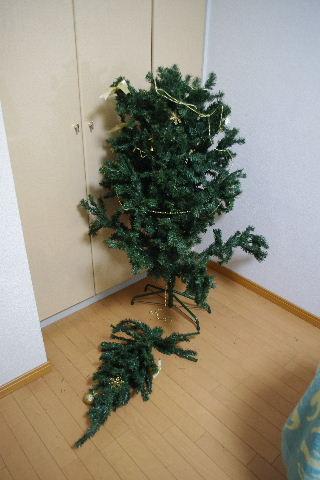 2010_1123neko0437.jpg