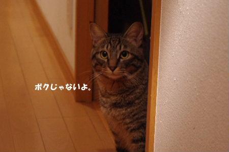 2010_1123neko0439.jpg