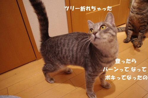 2010_1123neko0442.jpg