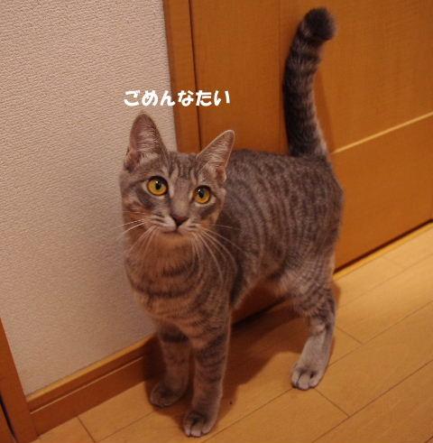 2010_1123neko0447.jpg