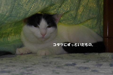 2010_1123neko0454.jpg