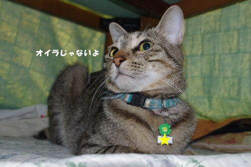 2010_1123neko0456.jpg