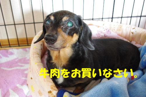 2010_1130neko0001.jpg