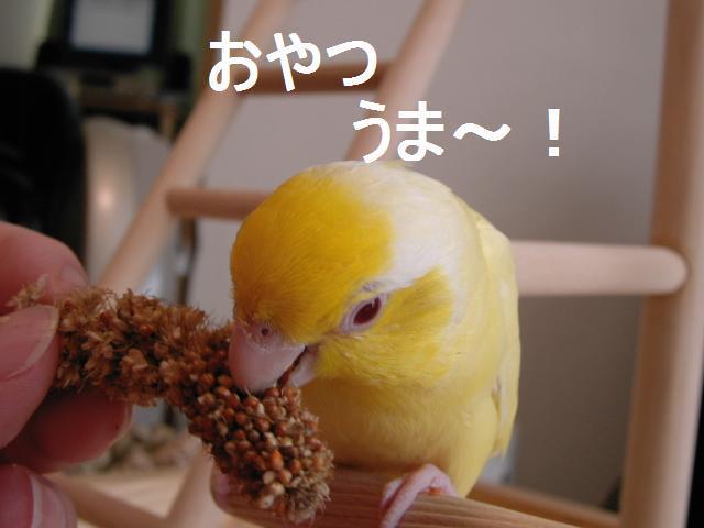 2010_01_27_04.jpg