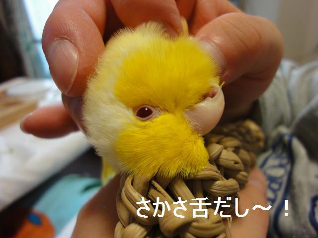 2010_02_07_02_01.jpg