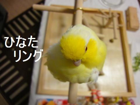 2010_02_15_05.jpg