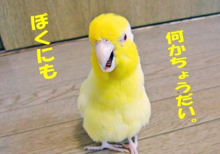 2010_05_15_04.jpg