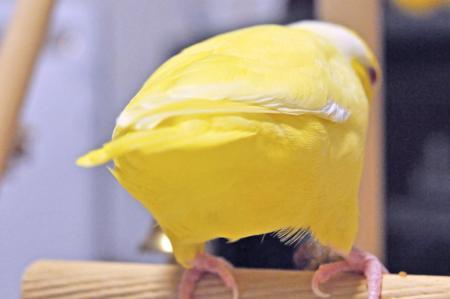 黄色いおちり!