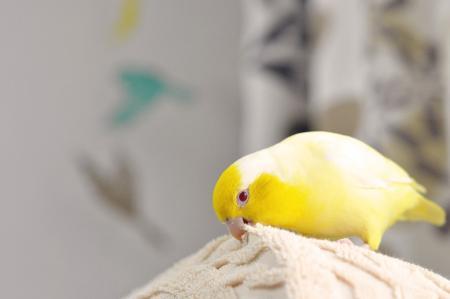 むむっ。後ろに鳥の気配が!