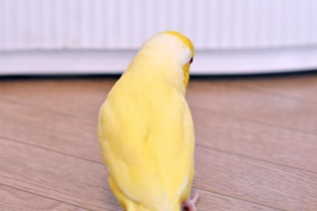 全部黄色になっちゃうかも!