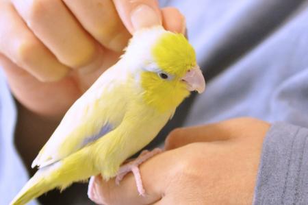 鳴くときは鳴くんです。鳥ですんで。