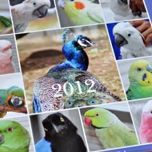 2012カレンダー。