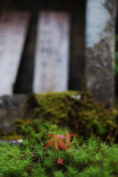 かもす神社3