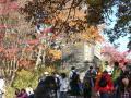 高尾山山頂の紅葉1