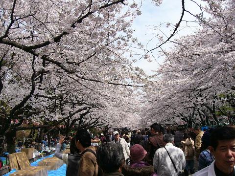 上野公園宴会エリア