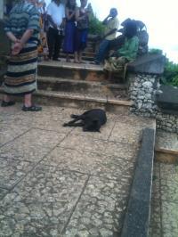Bali+29_convert_20100214225422.jpg