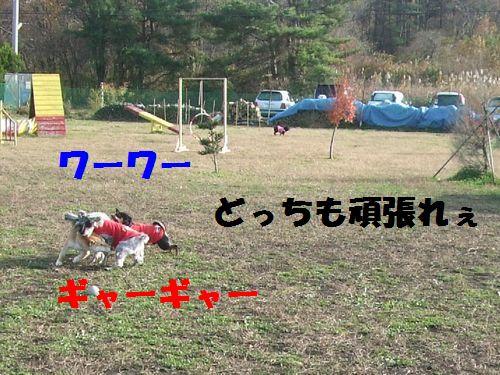 10_20101114201242.jpg