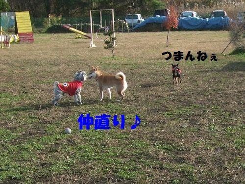 11_20101114201242.jpg