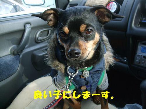 12_20100322174500.jpg