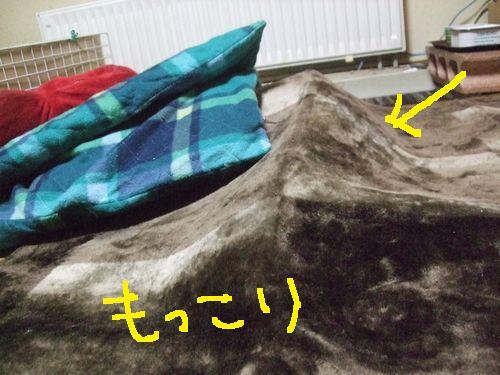 1_20101026201059.jpg