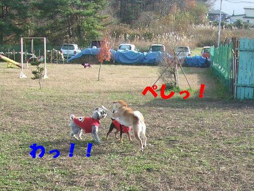 1_20101114201221.jpg