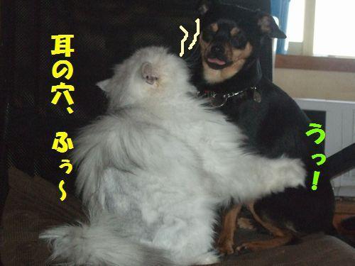 1_20110325212029.jpg