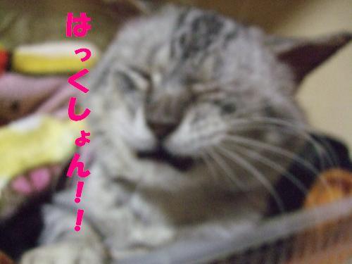 コピー ~ DSCF3097_convert_20100108013044