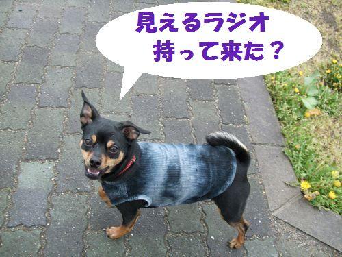 2_20100516093530.jpg