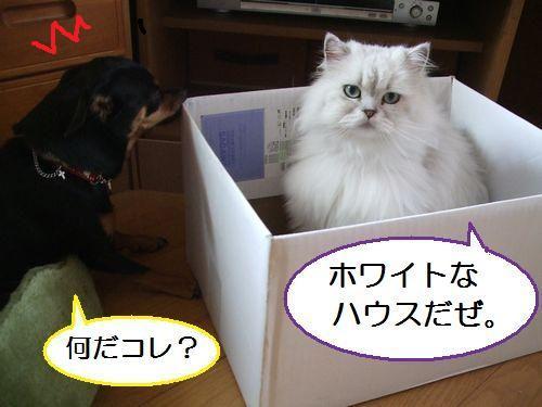 2_20100801105003.jpg