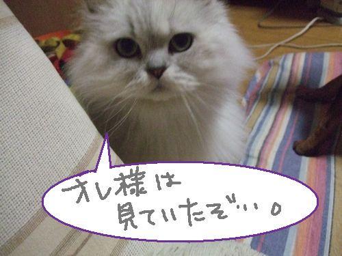 2_20100824200235.jpg