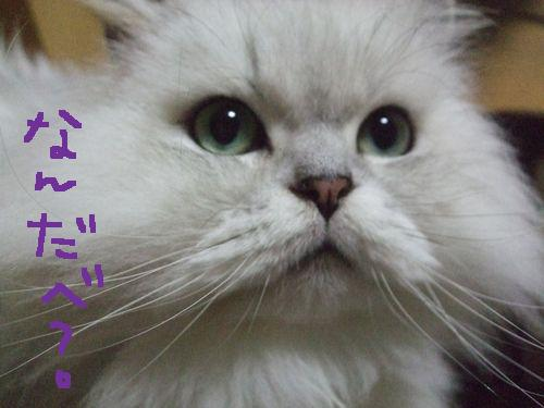 2_20101026201059.jpg