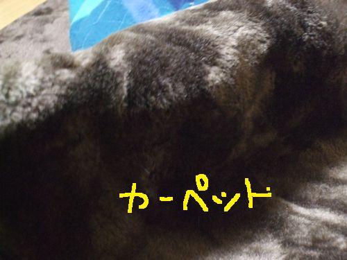 2_20101030181915.jpg