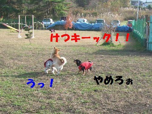 2_20101114201221.jpg