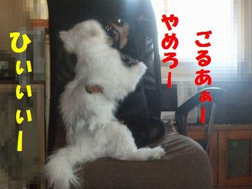 2_20110325212207.jpg