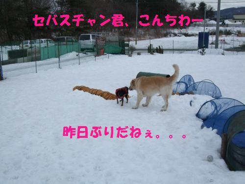 3_20100201155816.jpg