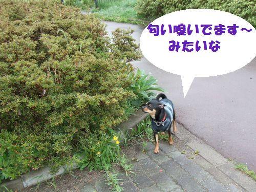 3_20100516093530.jpg