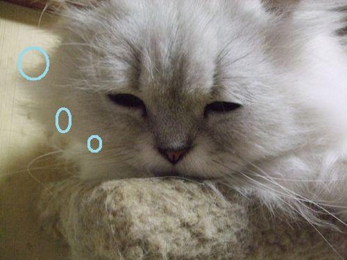 3_20100626212010.jpg