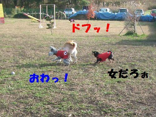 3_20101114201221.jpg
