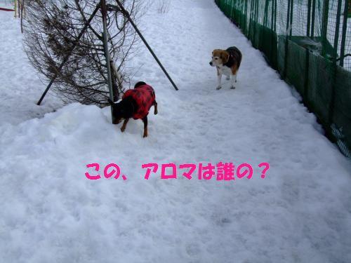 4_20100201155832.jpg