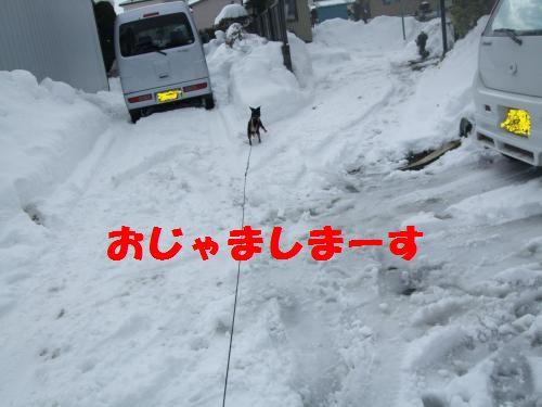 4_20100311140521.jpg