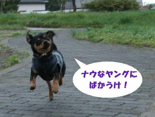 4_20100516093530.jpg