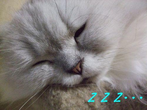 4_20100626212010.jpg