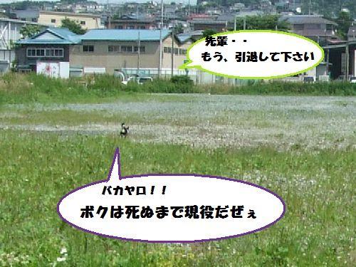 4_20100717215015.jpg