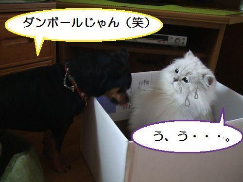 4_20100801105003.jpg