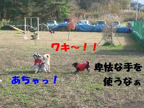 4_20101114201221.jpg