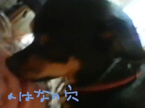 5_20100714202747.jpg
