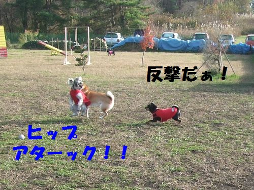 5_20101114201221.jpg